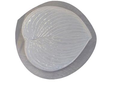 Hosta leaf plaster or concrete mold 1250