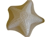Starfish Plaster Concrete Mold 7080