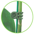 Daisy clips are perfect for securing stems to stakes for Orchids, houseplants, trellises, nets and more.