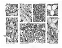 Beautiful wild flower note cards by artist Linda Cook DeVona; Set of 6 with envelopes.
