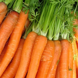 Carrot Root Extract - Water Based