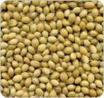 Coriander Seed Whole<br>16 oz Net Wt.