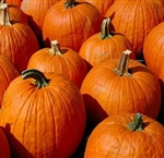 Pumpkin Extract - Water Based