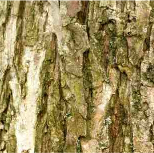 Willow Bark Extract Water Based