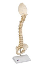 BONElike™ Pediatric/Child's Spine Model