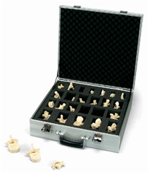 Set of 24 BONElike™ Vertebrae