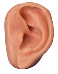 Acupuncture Ear Model, left
