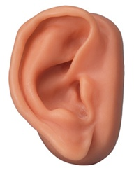 Acupuncture Ear Model, right
