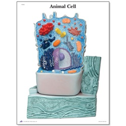 The Animal Cell STICKYchart™