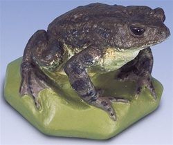 Common Toad Replica, female (Bufo bufo)