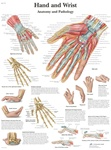 Hand & Wrist Anatomical STICKYchart