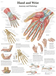 Hand and Wrist - Anatomical Chart