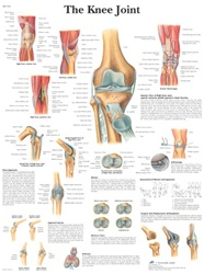 Knee Joint Anatomical STICKYchart