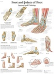 Foot & Ankle Anatomical STICKYchart