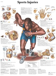 Sports Injury Anatomical STICKYchart