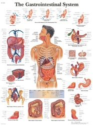 Gastrointestinal System Anatomical STICKYchart