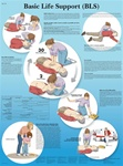 Basic Life Support Chart - Anatomical Chart