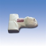 Cricotracheotomy Trainer