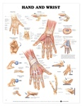 Hand and Wrist Anatomical Chart