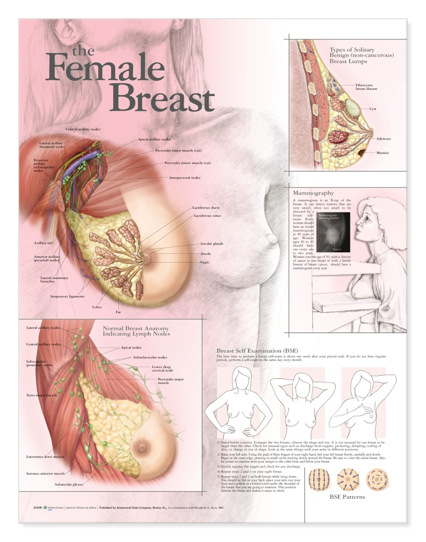 Chart Female Ottodeemperor