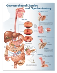 Gastroesophageal Disorders and Digestive Anatomy Anatomical Chart, 2nd Edition