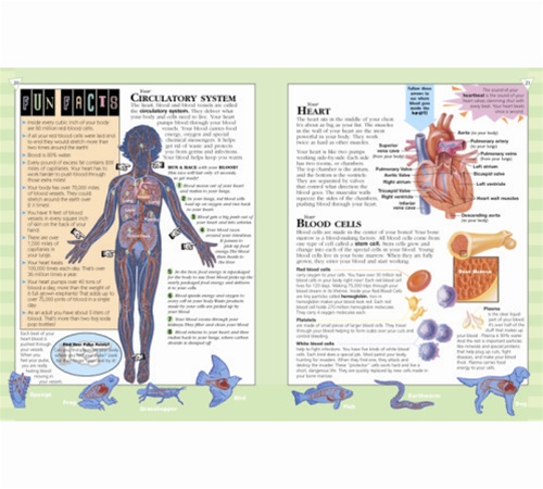 An Illustrated Adventure In Human Anatomy Anatomy Study Guides