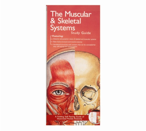 Muscular And Skeletal System Pocket Study Guide 2nd Edition