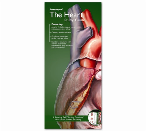 Anatomy of the Heart Pocket Study Guide - 2nd Edition - Anatomy ...