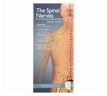 Spinal Nerves and the Autonomic Nervous System Pocket Study Guide - 2nd Edition