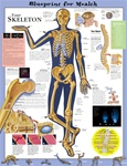 Blueprint for Health Your Skeleton Anatomical Chart