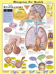 Blueprint for Health Your Respiratory System Anatomical Chart - Laminated