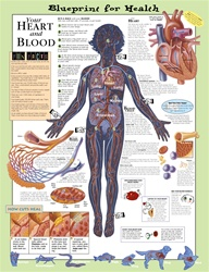 Blueprint for Health Your Heart and Blood Anatomical Chart