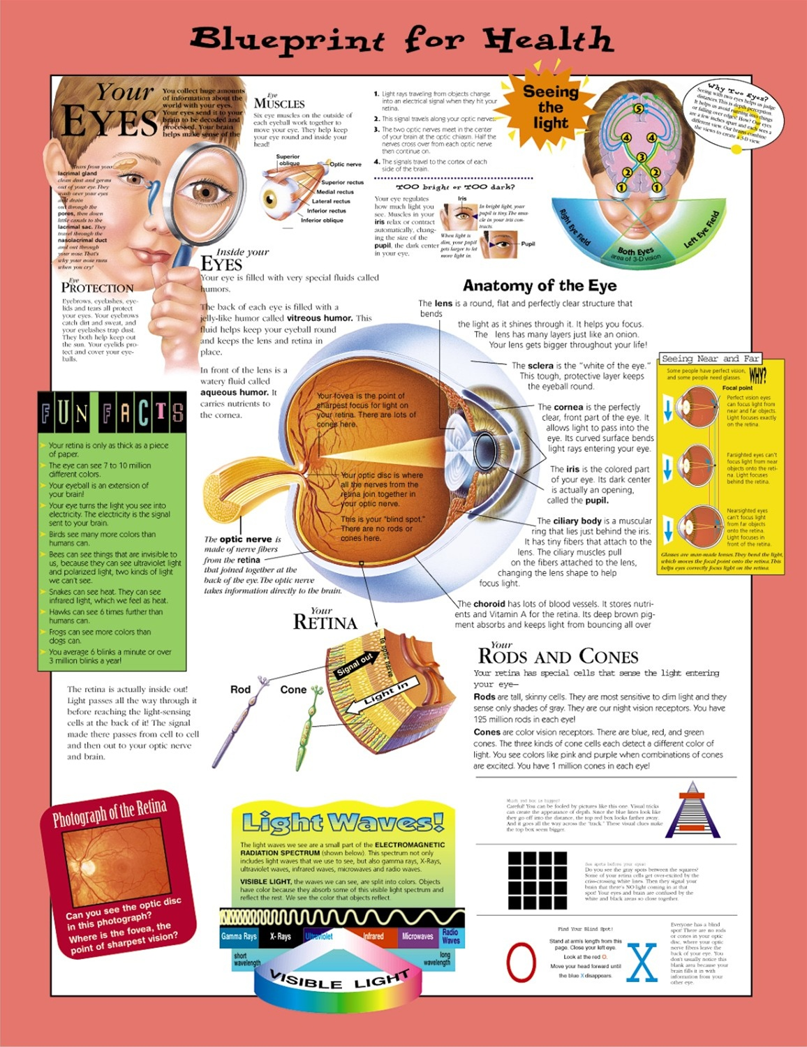 Blueprint for Health Your Eyes Anatomical Chart - Laminated
