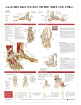 Anatomy and Injuries of the Foot and Ankle Anatomical Chart - Laminated