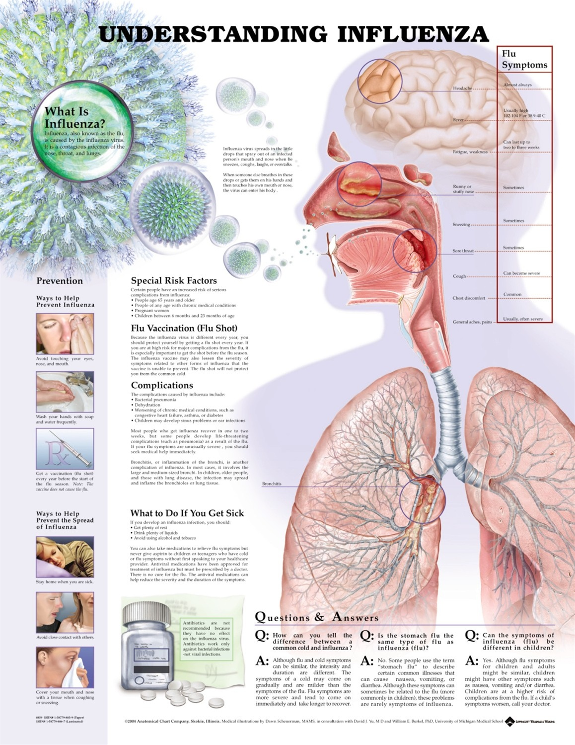Understanding Influenza Anatomical Chart - Anatomy Models and ...