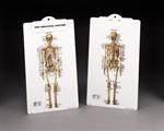 The Skeletal System Clipboard
