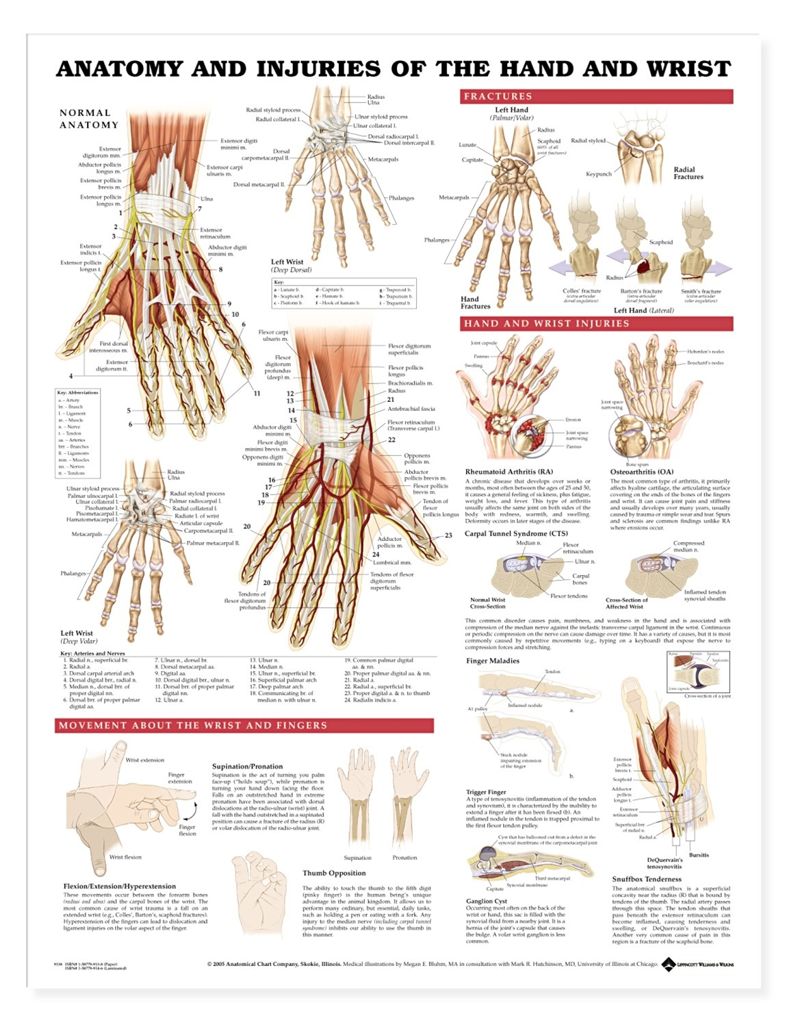 Anatomy and Injuries of the Hand and Wrist Anatomical Chart ...
