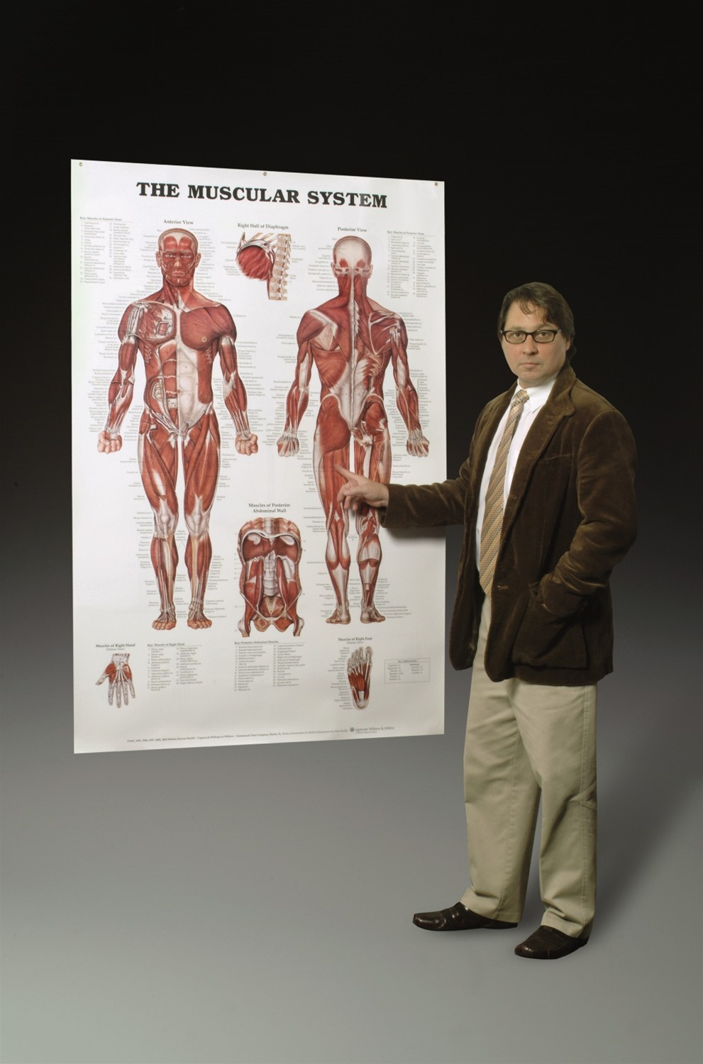 Muscular System Wall Chart Lifelike Anatomical Poster Learning 50x70cm Canvas Muscle Anatomy Chart