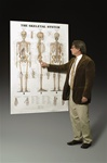 The Skeletal System Giant Anatomical Chart