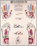 Reflexology Anatomical Chart
