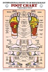 Foot Reflexology Anatomical Chart