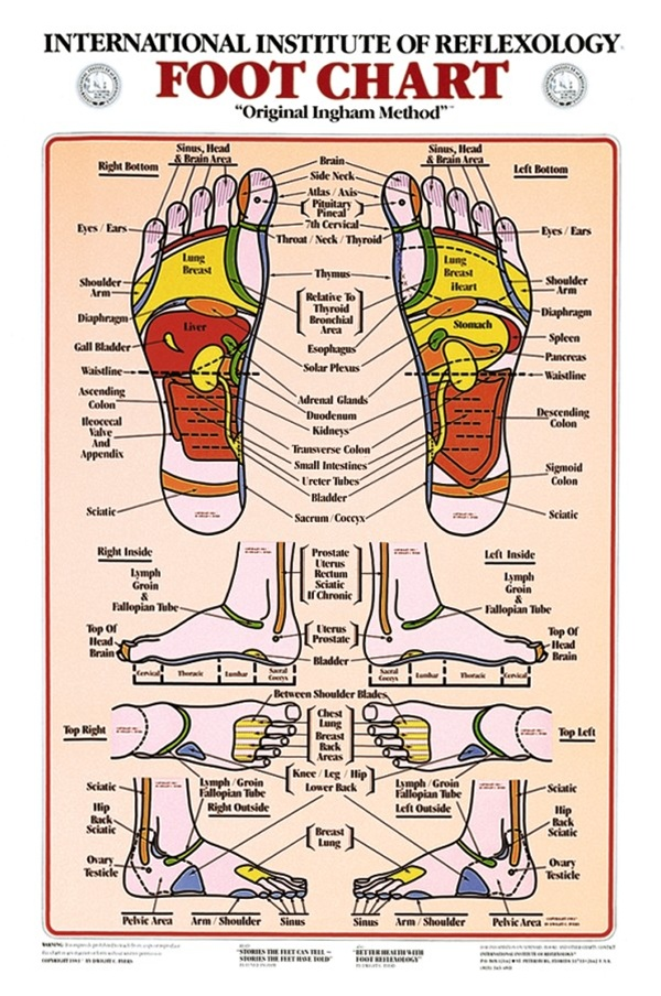 Foot Reflexology Anatomical Chart Anatomy Models And Anatomical Charts