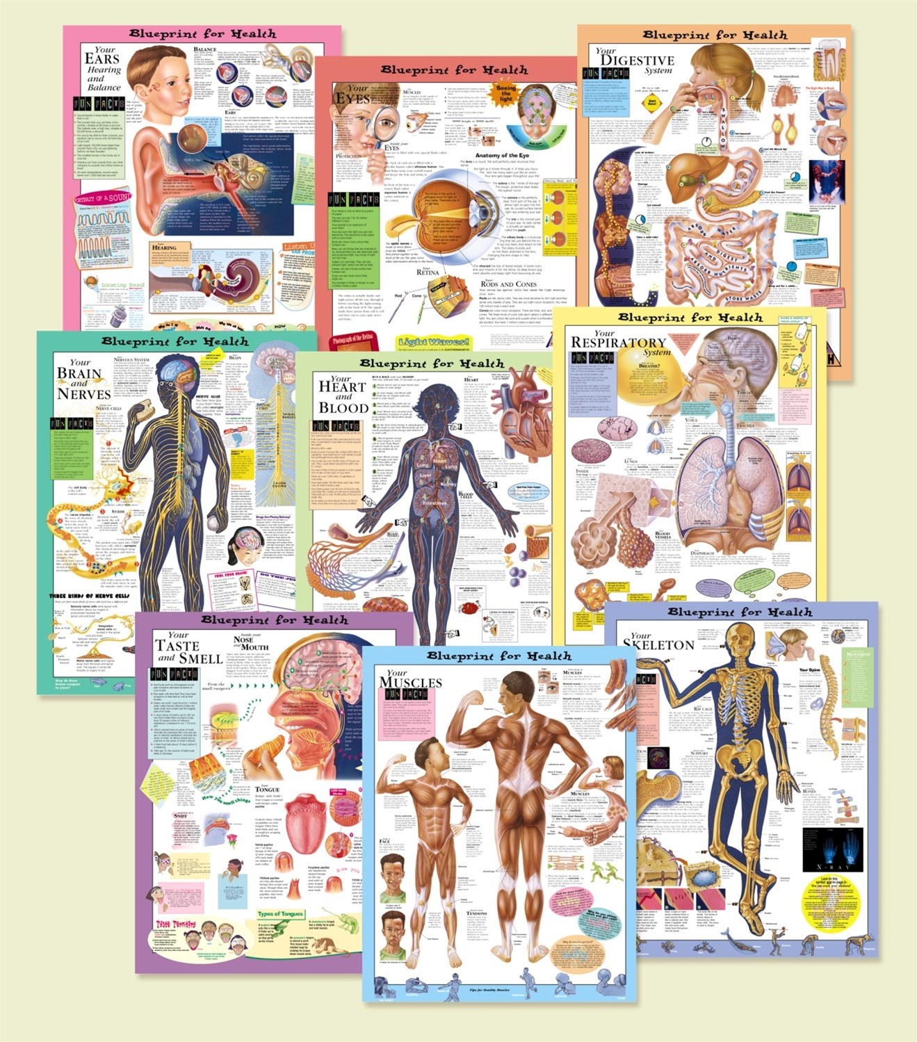 Blueprint for your health anatomical chart set all 9 laminated blueprint for your health anatomical chart set all 9 laminated malvernweather Choice Image