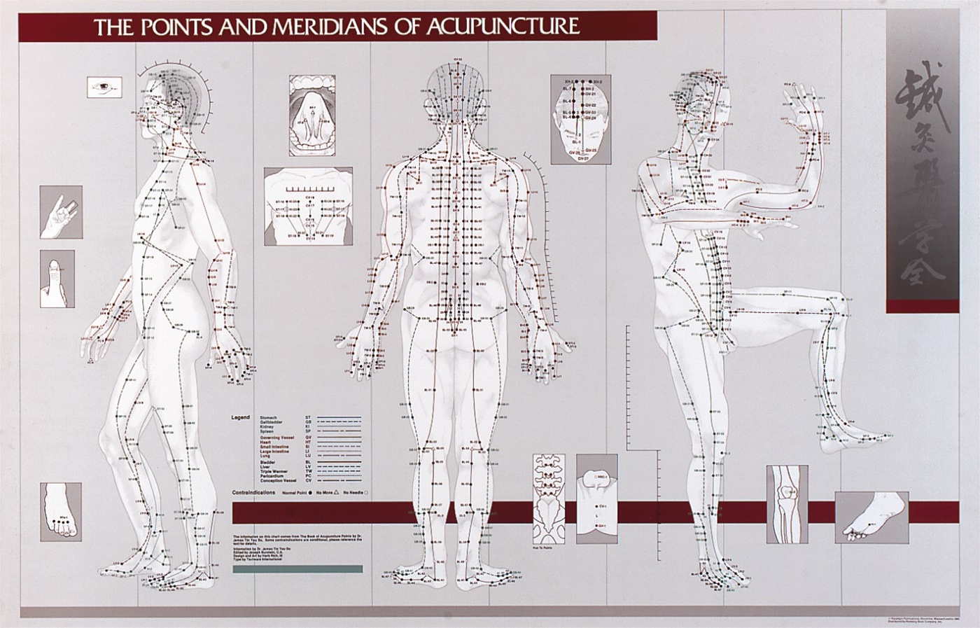 Pointeridians Of Acupuncture Laminated Chart Anatomy Models And Anatomical Charts