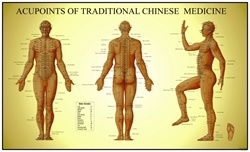 Acupoints of Traditional Chinese Medicine Anatomical Chart: Male