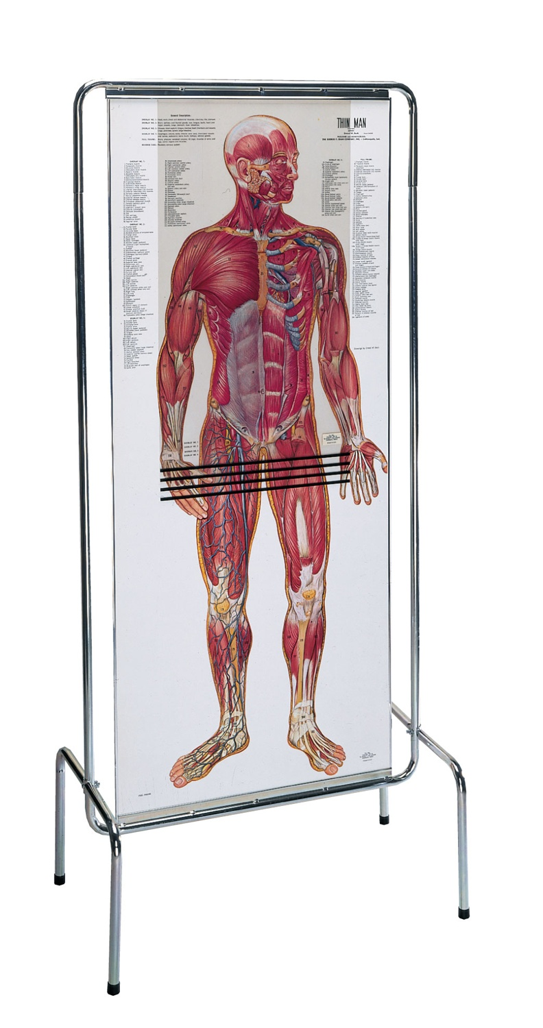 Thin Man Giant Anatomy Overlay Anatomical Chart - Anatomy Models and ...