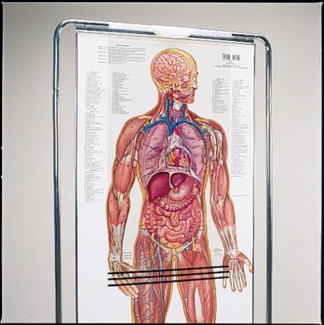 Thin Man Giant Anatomy Overlay Anatomical Chart Anatomy Models And
