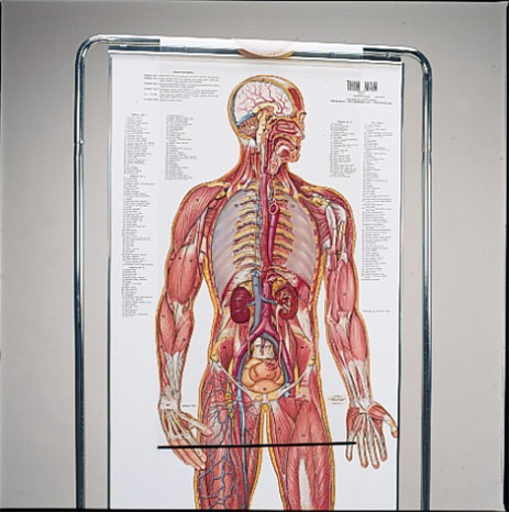 Thin Man Giant Anatomy Overlay Anatomical Chart Anatomy Models And