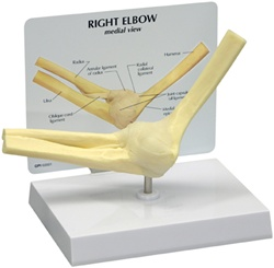 Basic ElbowJoint Model