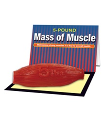 Mass of Muscle Model (5 lb)